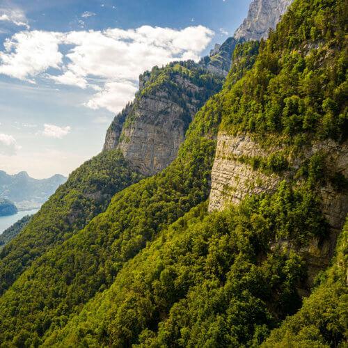 Die Biodiversitätsstrategie greift auch fernab der Stadt, wie hier an der Nordflanke der Churfirsten hoch über dem Walensee. Hier befindet sich das über 118 Hektare grosse Naturwaldreservat Josenwald. Es ist das älteste Waldreservat im Kanton St.Gallen und wurde 2019 erweitert. Bis Ende 2024 sollen 670 Hektaren neue Naturwaldreservate geschaffen werden. Bild: ANJF, Nicolas Zonvi