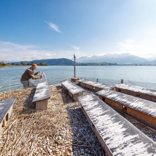 Die Wildhüter des Kantons St.Gallen kontrollieren die Plattformen regelmässig. Während der Brutsaison überwacht eine Kamera, wie sich die Jungvögel entwickeln. Bild: ANJF, Nicolas Zonvi
