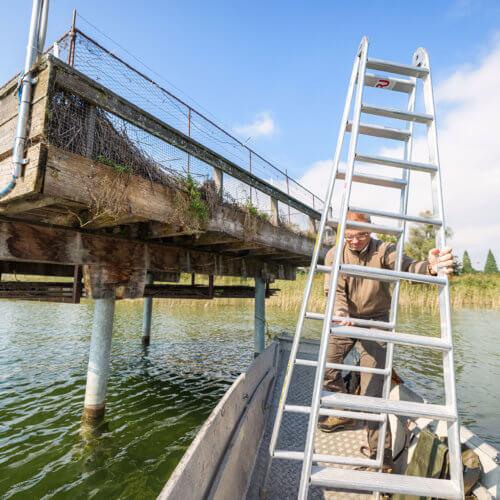 Um die Lachmöwe und die Flussseeschwalbe zu fördern, hat der Kanton St.Gallen am Obersee zwei Brutplattformen eingerichtet. Sie schützen die Jungvögel vor Räubern. Bild: ANJF, Nicolas Zonvi