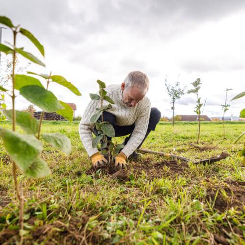 Für die neue Hecke wurden 15 verschiedene Arten von Sträuchern verwendet, darunter Hartriegel, Faulbaum, Liguster, Kreuzdorn, schwarzer Holunder und Wolliger Schneeball. Bild: ANJF, Nicolas Zonvi