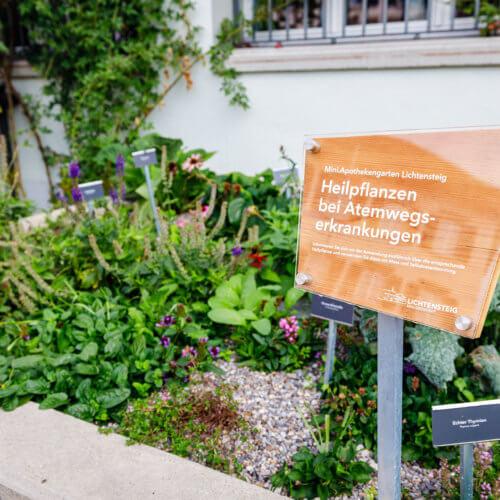 Die Öffentlichkeit darf sich gratis an den Heilkräutern bedienen. Gleichzeitig fungieren sie als Bienen- und Schmetterlingsweide. Bild: ANJF, Nicolas Zonvi